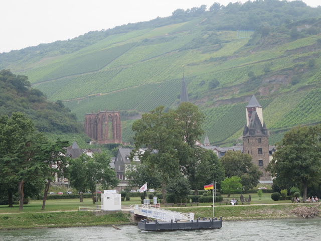 vineyards along river rhine