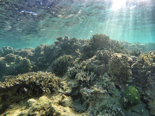 coral reef masasa beach
