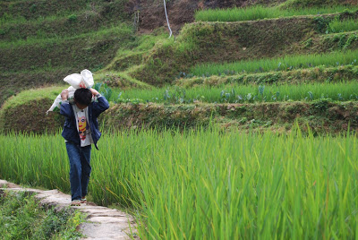 a child walking along the rice terraces